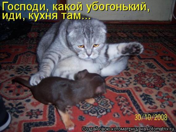 1372395995_www.radionetplus.ru-7 (570x427, 73Kb)