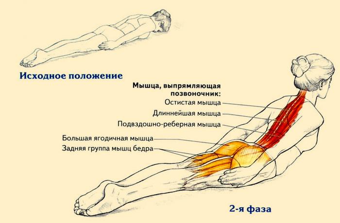 Комплекс несложных упражнений для улучшения осанки