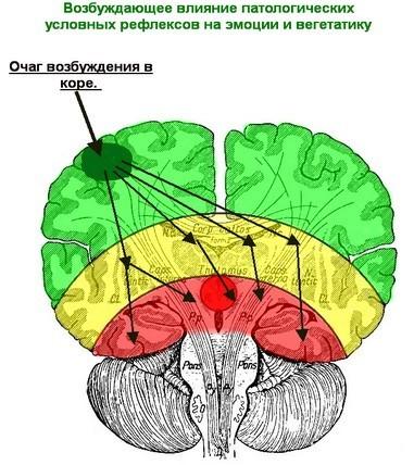 Вегето-сосудистая дистония с точки зрения нейрофизиологии (381x428, 61Kb)