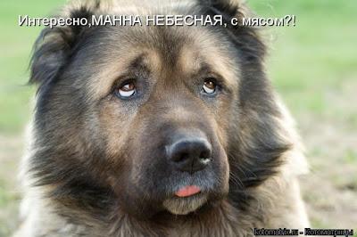 собака Умка (400x266, 33Kb)