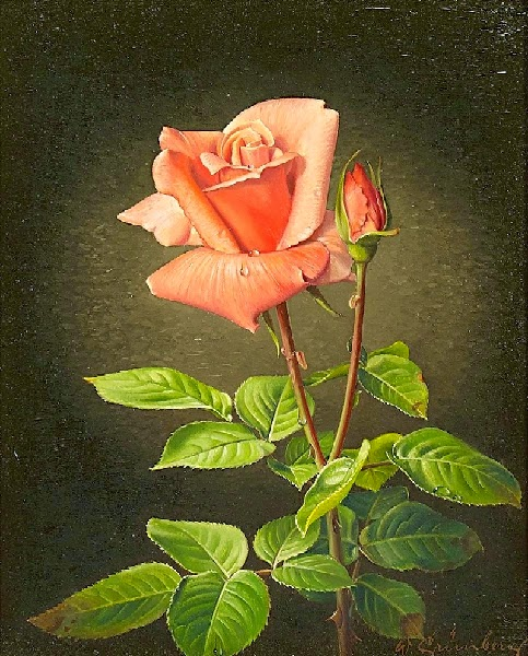 rosenbluete-1 (483x600, 114Kb)