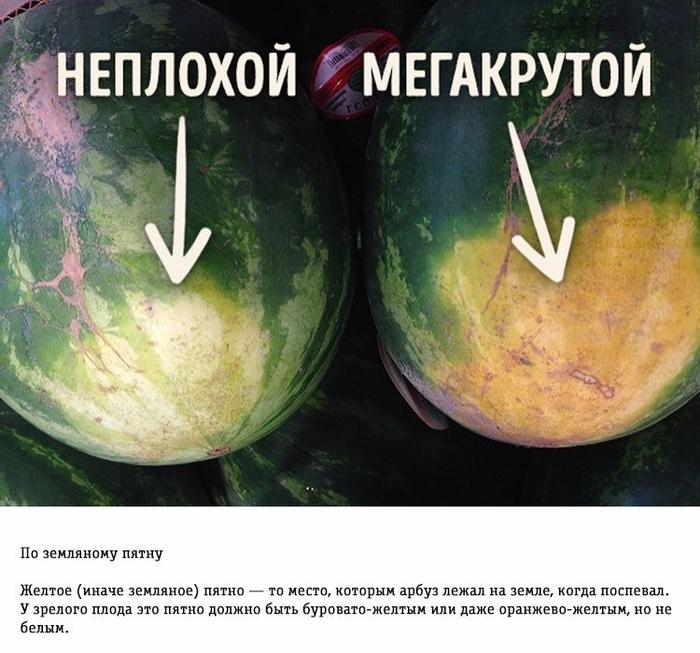 Как правильно выбирать арбуз (700x653, 419Kb)