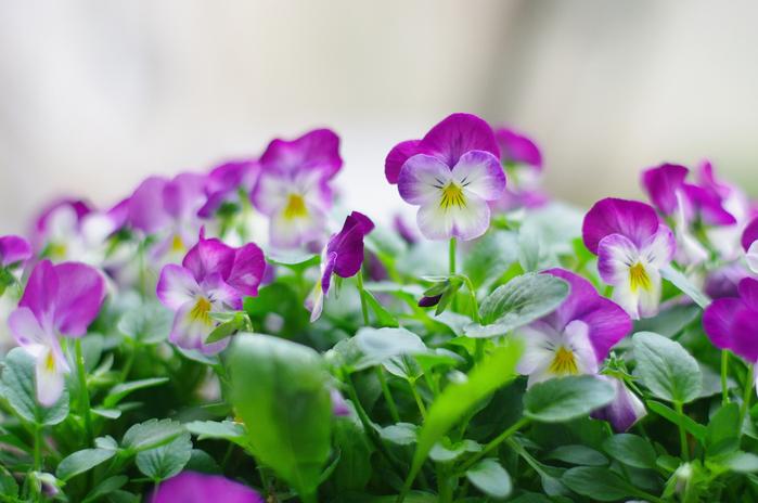 summer flowers 21 (700x464, 371Kb)