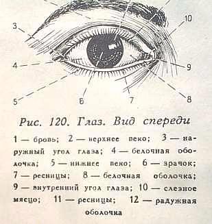 Делаем глаза из пластики (16) (309x327, 93Kb)