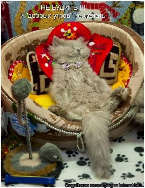 про кота Тимофея (494x640, 95Kb)