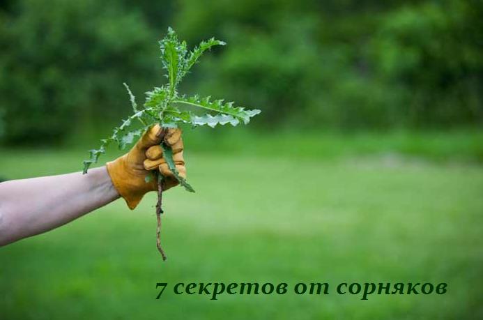 2749438_7_sekretov_ot_sornyakov (693x459, 233Kb)