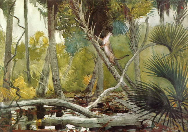 In the Jungle, Florida, 1904 (648x454, 417Kb)