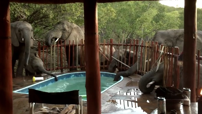 6080863_elephants_pool (700x393, 103Kb)