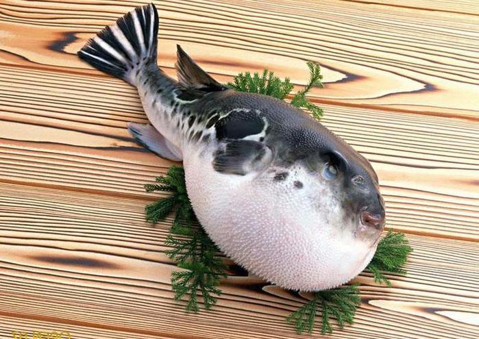 fugu (700x495, 83Kb)