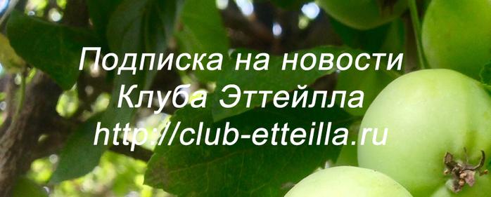 5178252_0001_6 (700x281, 241Kb)