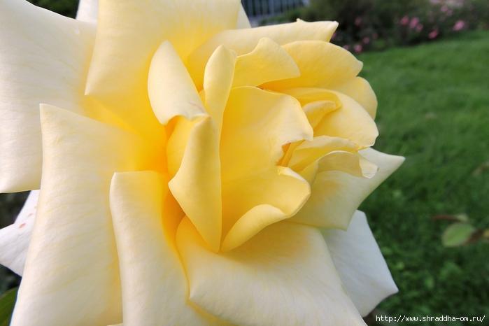 Спб, Ботанический сад (21) (700x466, 186Kb)