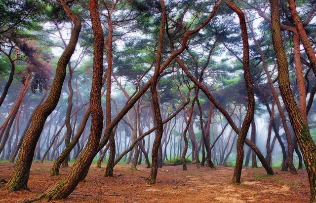 beautiful-mysterious-forests-4_880 (640x412, 367Kb)