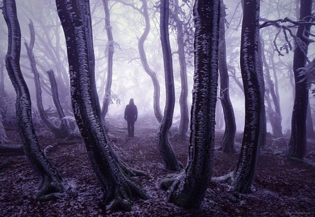 beautiful-mysterious-forests-6_880 (640x441, 244Kb)