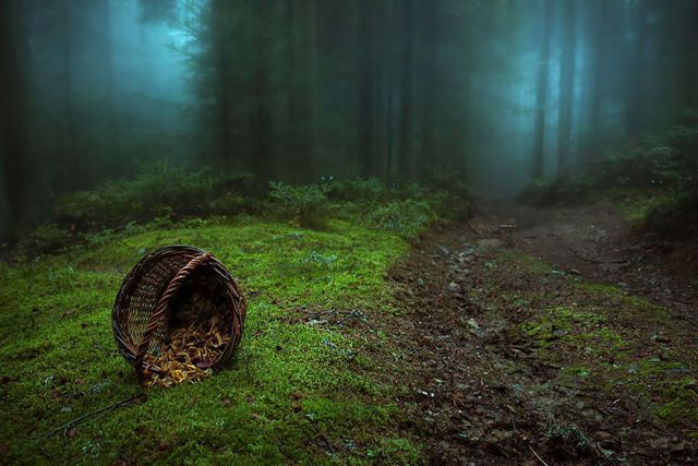 beautiful-mysterious-forests-9_880 (640x427, 242Kb)