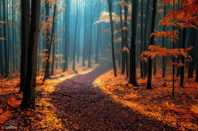 beautiful-mysterious-forests-11_880 (640x425, 389Kb)