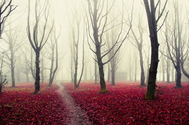 beautiful-mysterious-forests-14_880 (640x424, 264Kb)