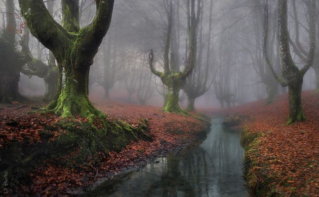 beautiful-mysterious-forests-221_880 (640x396, 182Kb)