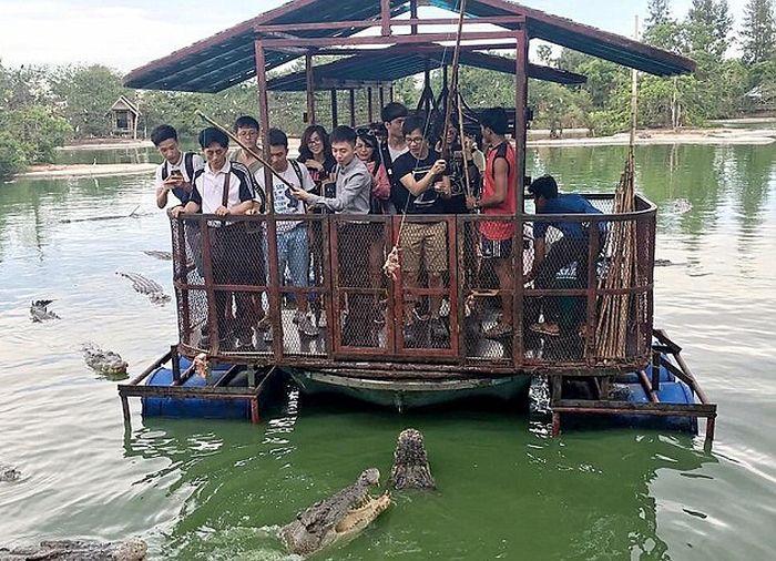 кормление крокодилов в таиланде фото 2 (700x506, 398Kb)