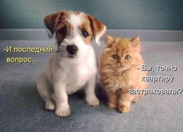FB_IMG_1470948690395 (604x436, 34Kb)