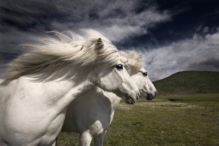 horse-11-1024x683 (700x466, 255Kb)