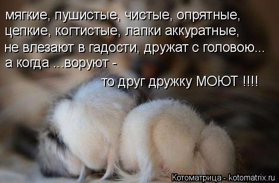 kotomatritsa__P (548x360, 172Kb)