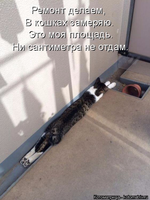 kotomatritsa_5H (524x700, 304Kb)