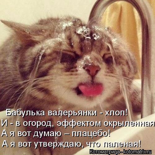 kotomatritsa_8o (500x500, 244Kb)