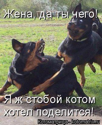 kotomatritsa_9q (335x411, 184Kb)