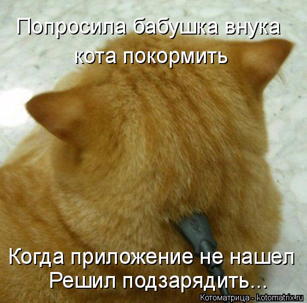 kotomatritsa_DU (604x596, 312Kb)