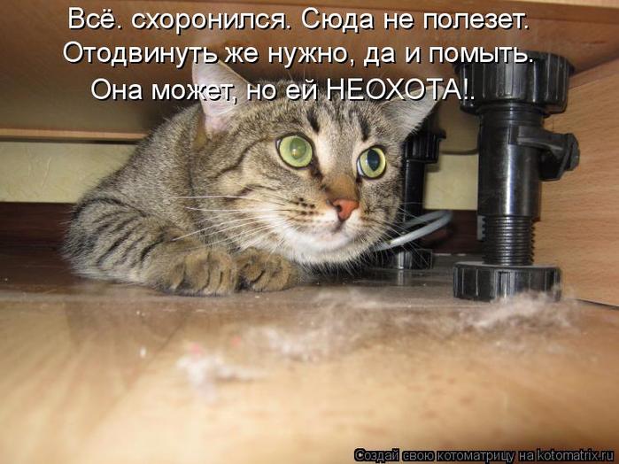 kotomatritsa_F8 (700x524, 351Kb)
