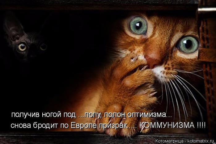 kotomatritsa_jJ (700x466, 273Kb)