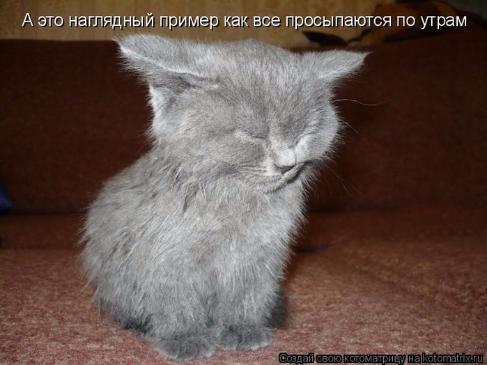 kotomatritsa_k (700x524, 304Kb)