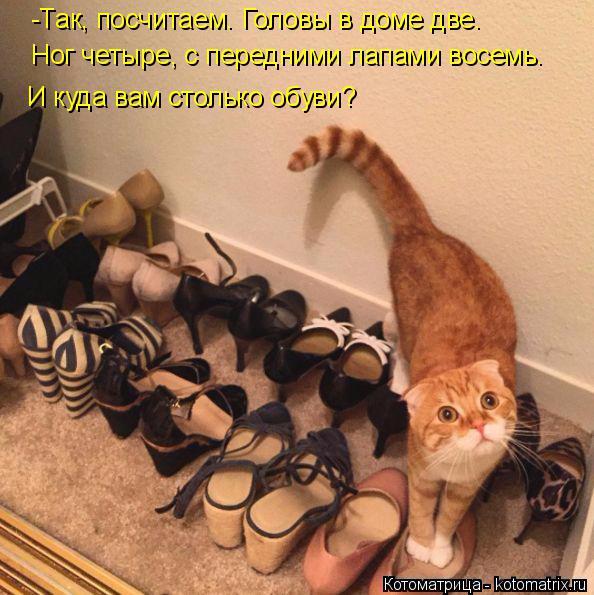 kotomatritsa_kD (594x595, 338Kb)