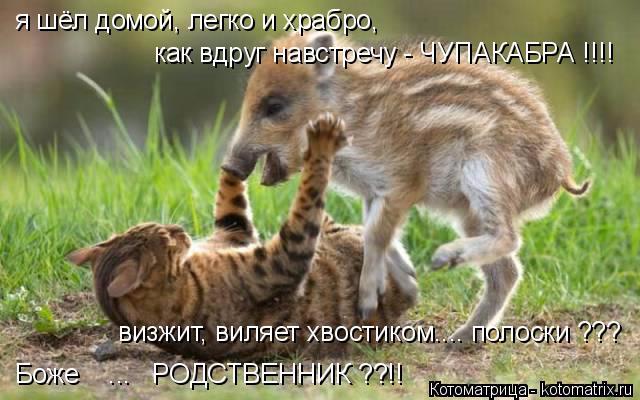 kotomatritsa_Kk (640x400, 253Kb)
