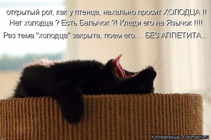 kotomatritsa_kw (700x465, 278Kb)