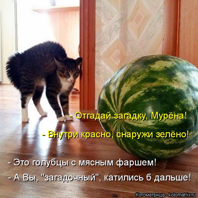 kotomatritsa_l (1) (670x669, 428Kb)