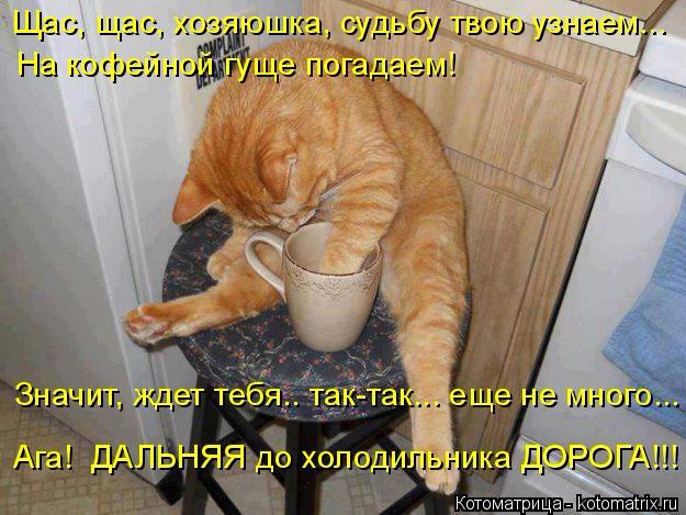 kotomatritsa_L_ (625x469, 328Kb)