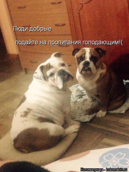 kotomatritsa_Mt (524x700, 372Kb)