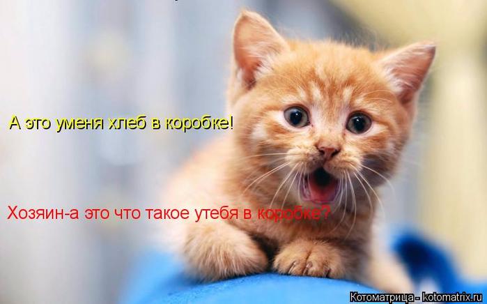 kotomatritsa_q (700x436, 252Kb)