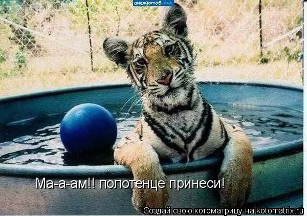 kotomatritsa_T3 (600x422, 254Kb)