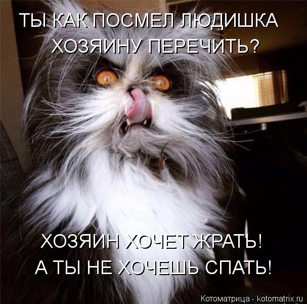 kotomatritsa_x (607x600, 266Kb)