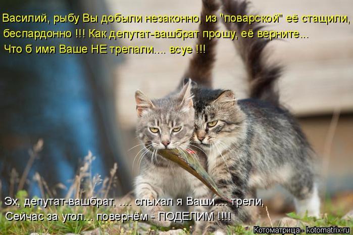 kotomatritsa_y (2) (700x465, 358Kb)
