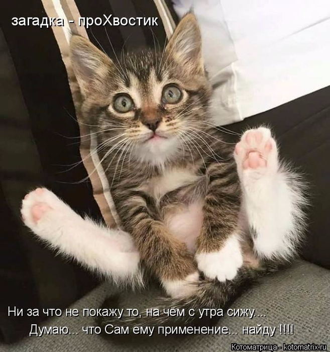 kotomatritsa_Z (657x700, 372Kb)