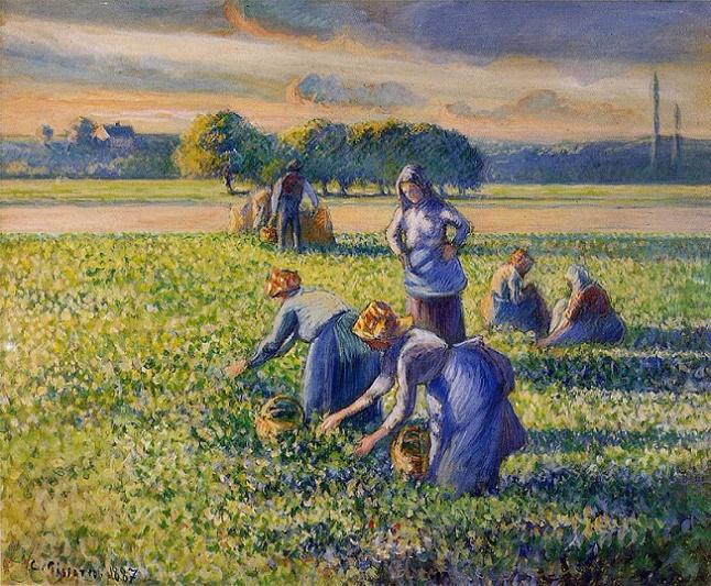 Picking Peas (646x533, 545Kb)
