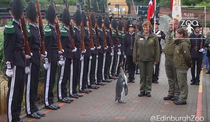 пингвин сэр Нильсон Олав
