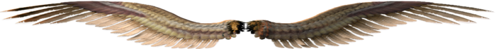 pic (2) (700x70, 71Kb)