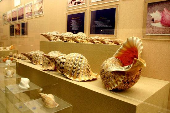 музей ракушек на пхукете 1 (550x366, 180Kb)