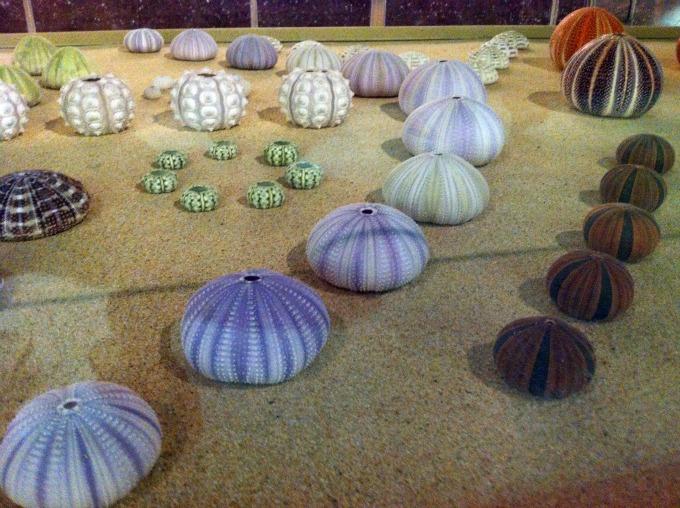 музей ракушек на пхукете 7 (680x508, 437Kb)