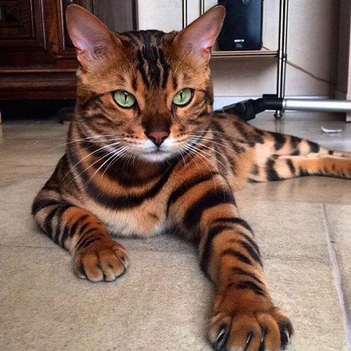смешные кошки фото 2 (500x500, 221Kb)