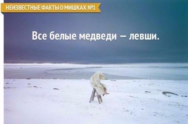 129158529_Neizvestnuye_faktuy_o_mishkah (1) (600x396, 150Kb)